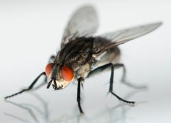 ультразвуковой отпугиватель мух