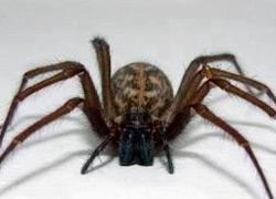 ультразвуковой отпугиватель пауков