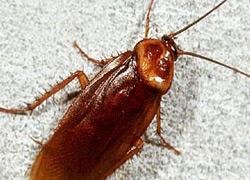 отпугиватель жуков тараканов