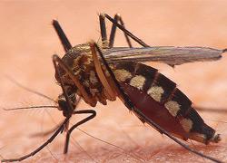 ультразвуковой отпугиватель комаров