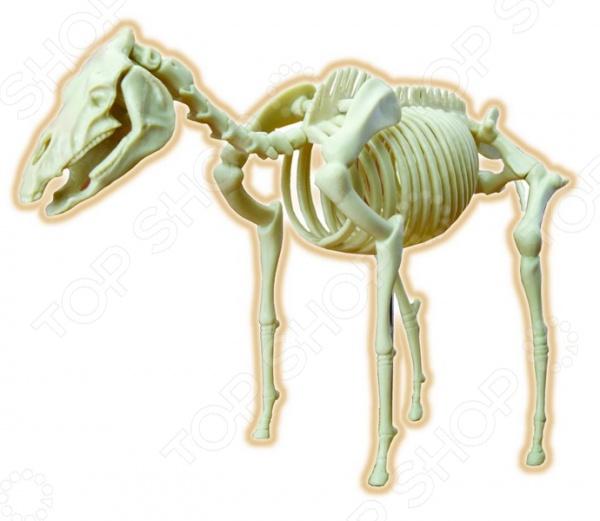 Наглядное пособие Eastcolight «Скелет лошади» конструкторы eastcolight сборная модель science time скелет трицератопса 14 элементов