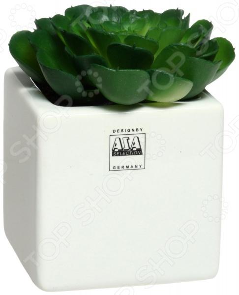 Asa selection deko 11643 for Top deko shop