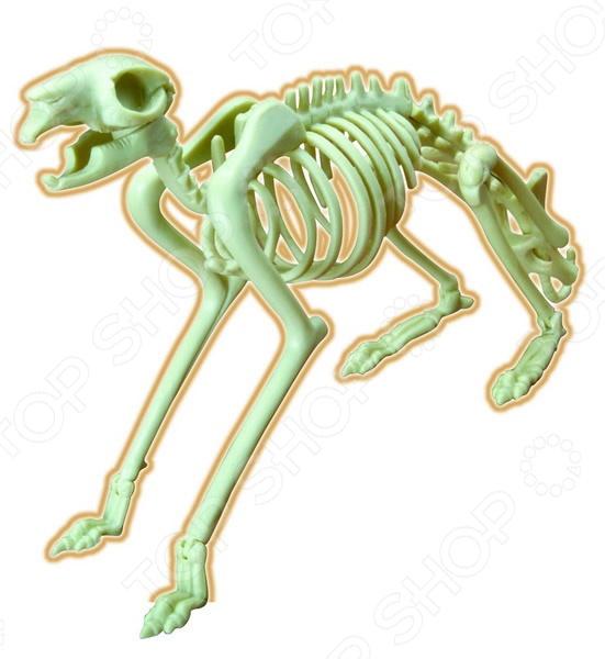 Наглядное пособие Eastcolight «Скелет кролика» конструкторы eastcolight сборная модель science time скелет трицератопса 14 элементов