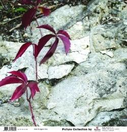 фото Бумага для скрапбукинга Rayher «Цветы на камнях», купить, цена