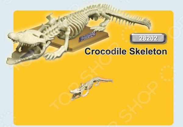 Наглядное пособие Eastcolight «Скелет крокодила» конструкторы eastcolight сборная модель science time скелет трицератопса 14 элементов