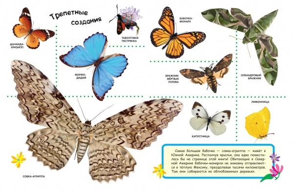 В раннем возрасте дети любят рассматривать картинки. Книги с яркими фотографиями познакомят малыша с техникой, автомобилями, с разными видами животных, дадут самые первые знания об окружающем мире. Познавай и открывай мир с Лучшей энциклопедией в картинках для малышей .