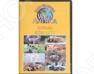Видео о животных Wild America