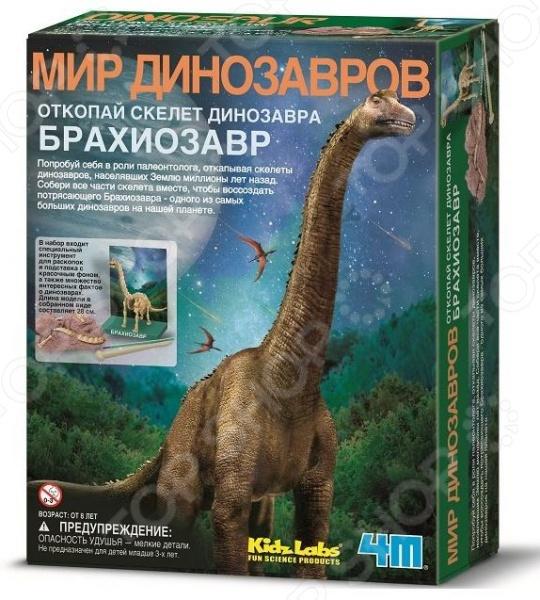 Набор юного археолога 4M «Скелет Брахиозавра» скелет брахиозавра 4m