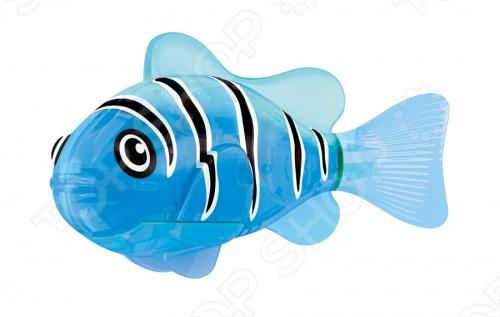 Роборыбка светодиодная Zuru RoboFish Синий маяк - это инновационная рыбка, которая при соприкосновении с водой начинает не только плавать как живая, но и светиться. Синий цвет, которым светится представляемая модель РобоРыбки, соответствует её синему окрасу, украшенному чёрными полосками от спины. Благодаря встроенному светодиоду, за рыбками интересно наблюдать в темноте. Мягкий силиконовый хвост и электромагнитный мотор помогают ей двигаться в 5 различных направлениях. Игрушка плавает в воде в течение 4 минуты, после чего ее можно вынуть из воды, и снова опустить в воду, чтобы рыбка заработала снова.