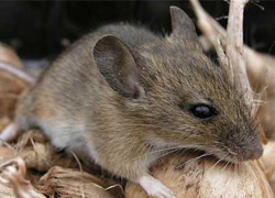 ультразвуковой отпугиватель мышей