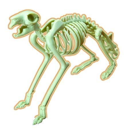 Купить Наглядное пособие Eastcolight «Скелет кролика»