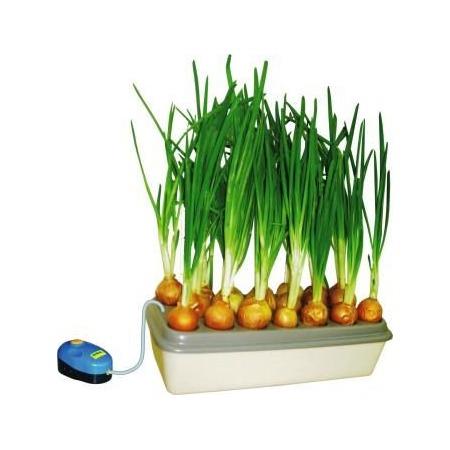 Купить Грядка гидропонная «Луковое счастье»