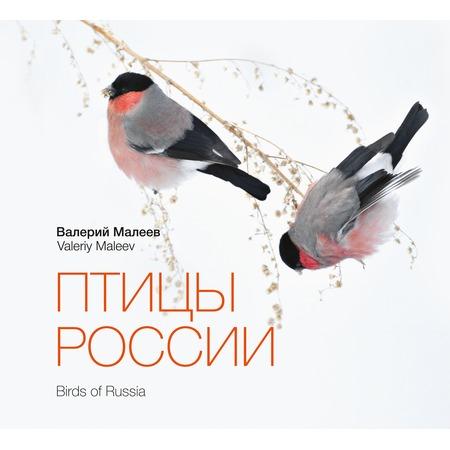 Купить Птицы России