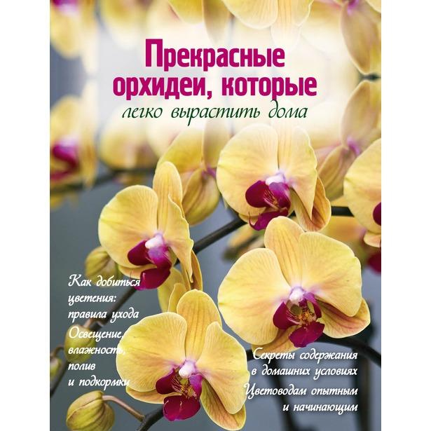 фото Прекрасные орхидеи, которые легко вырастить дома