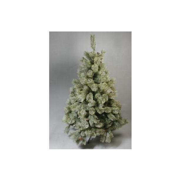фото Сосна декоративная Снегурочка «Нежная». Количество шишек: 54. Высота: 210 см