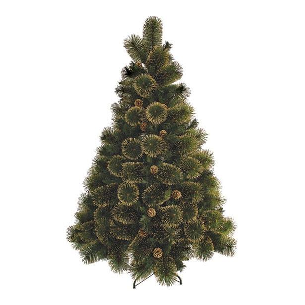фото Сосна декоративная Снегурочка «С золотом»