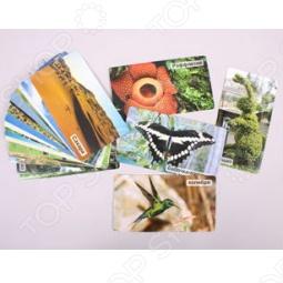фото Карточки развивающие Умница «Рекорды природы», Соковыжималки ручные