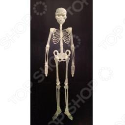 фото Скелет флуоресцентный, Другие элементы интерьера